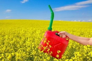 biomasse combustibili
